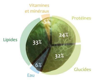 Composition nutritionnelle graine de chanvre